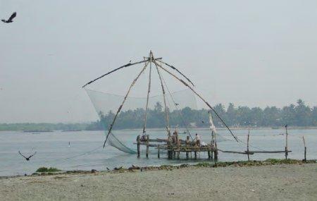 Black kites around a raised net