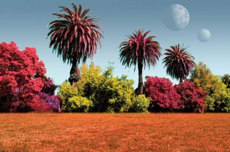Exotic colors on an alien world